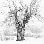 Vermont-Will Austin's apple tree-58